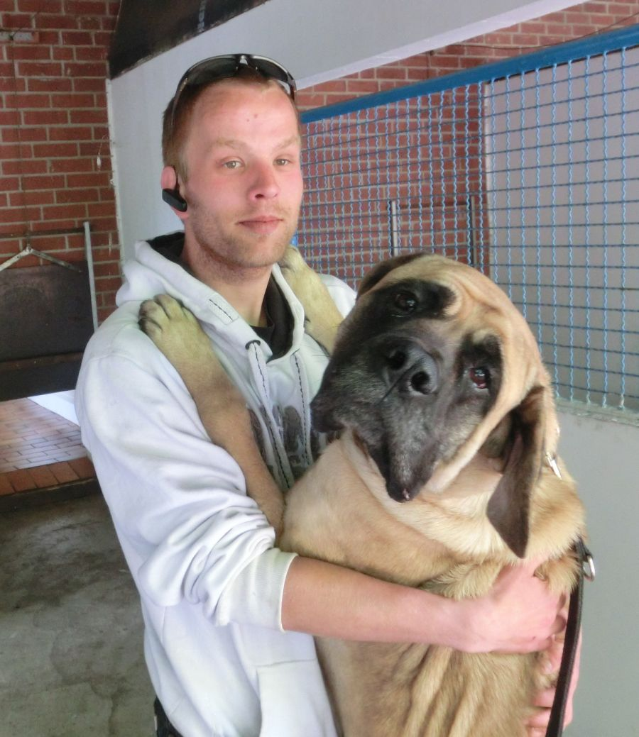 giant maso mastiff - photo #15