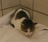 1-fundkater-siam